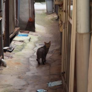 猫三昧、猫写真三昧。