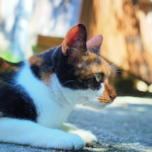 孤猫たち:ラスト