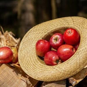 松尾アトム前派出所はヒモ?りんご農家の年収がヤバイ!農園はどこ?