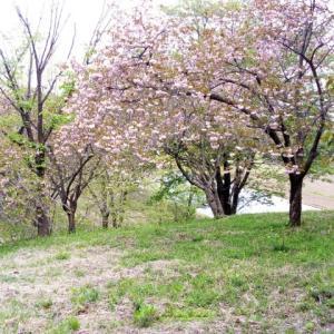 栃木県 祖母井町 富士山公園