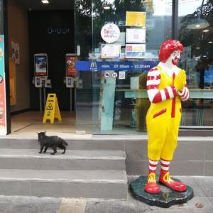 通勤路の猫
