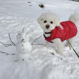 【栃木】わんこと雪は最高の組み合わせ!山頂ドッグランで雪合戦! マウントジーンズ那須