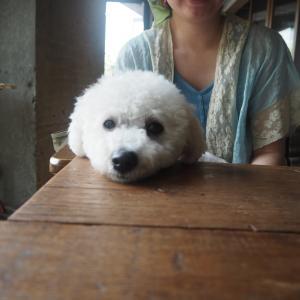 【休業】ドッグラン付き 神門村 喫茶zizi 千葉県君津市