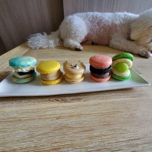 【学芸大学】 たまらない可愛さ!韓国マカロン専門店「YOLO TOKYO Cafe&Desserts」  目黒区