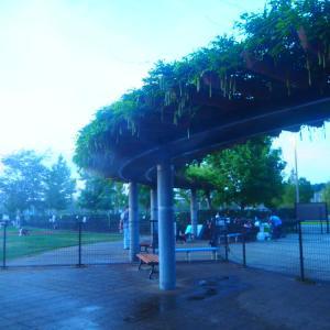 天然芝とミストシャワーで熱中症対策、さらにトレーナー常駐!『新横浜公園ドッグラン』  日産スタジアム 神奈川