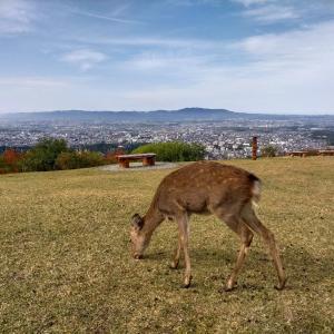 古都奈良で寺社・仏像めぐり 東大寺の大仏、阿修羅像ほか