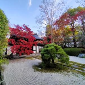 コロナで観光客の少ない京都へ行ってみたの2日目
