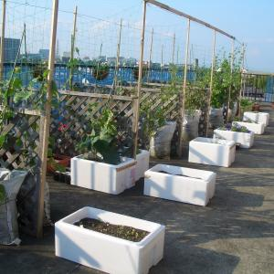 ルーフバルコニーまたはベランダで家庭菜園をおすすめしない7つの理由