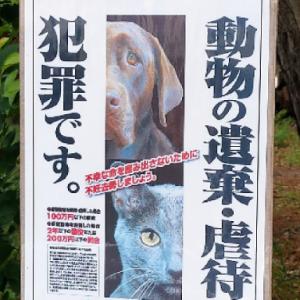 のら猫保護活動