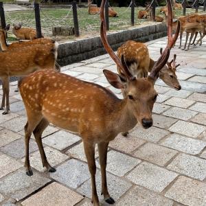 鹿と大仏とよもぎ餅
