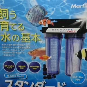 金魚水対策