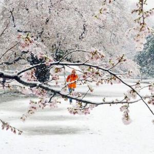 東京戒厳令の日 まさかの大雪警報発令