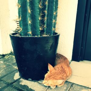 砂漠の国で出会った猫コレクション