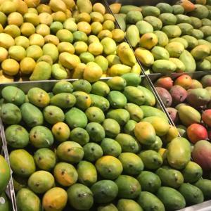 今年も美味しいインド産マンゴーの季節がやってきた!