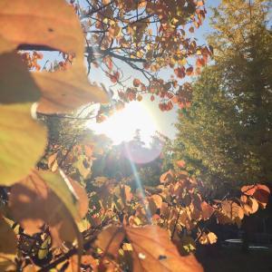 秋の色彩が好き