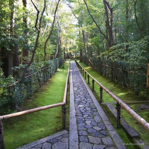 【二条・西陣・御所 お立ち寄りスポット】大徳寺 高桐院|紅葉・青紅葉が美しい