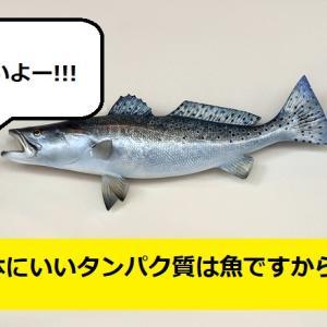 なぜ魚はびちびちするのか?健康にいいタンパク質は魚だった。