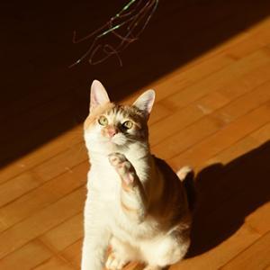 猫的ダンス!
