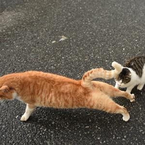 灯台猫たち2020.01.17(2)