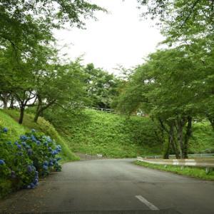 城山公園、緑