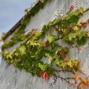 秋のポートレイト