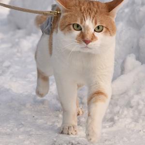 ♪猫は~喜び…