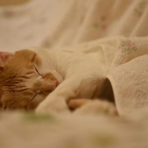 くるまって眠る