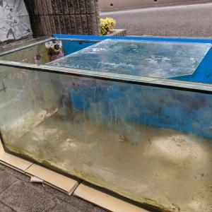 水漏れ水槽のボランティア交換