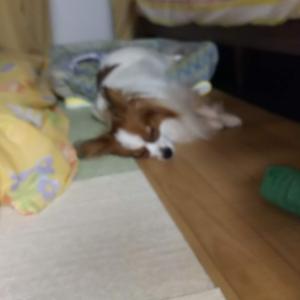寝顔 (*^-^*)