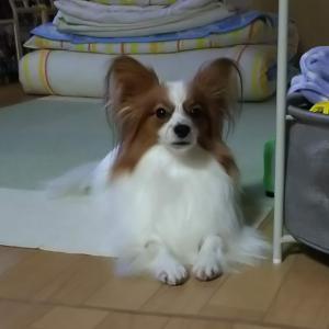 久しぶりのダウン(>_<)