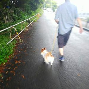雨上がりの・・・(*^▽^*)