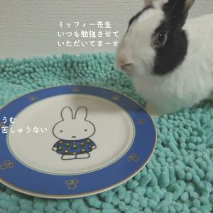☆【うさぎ絵日記】 嗚呼 ・ 収穫祭