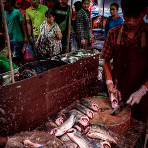 クロントゥーイ市場で魚をさばく男 (タイ)