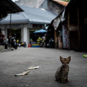 グロドック地区にいた子猫 (インドネシア)