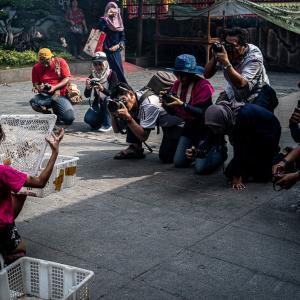 金徳院で放生する女の子 (インドネシア)
