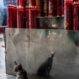 金徳院にいた猫 (インドネシア)
