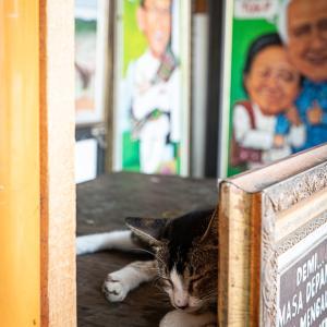 絵画の陰で寝る猫 (インドネシア)