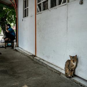歩道にいた二匹の猫 (インドネシア)