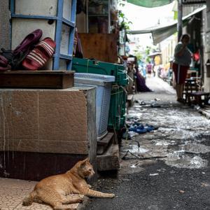 住宅街の路地でのんびりしていた猫 (インドネシア)