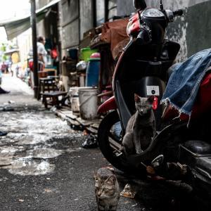 ジャカルタの路地にいた猫 (インドネシア)
