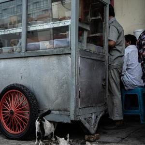 屋台の側で寝る猫 (インドネシア)