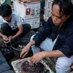 カエルを売る男 (インドネシア)