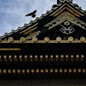 上野東照宮の鳩 (東京)