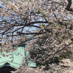 鎌倉逗子  桜づくし散歩