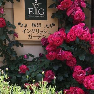 横浜イングリッシュガーデン  小径散歩と本屋さんへ🌹