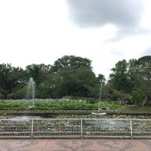 日比谷花壇大船フラワーセンターと鎌倉の老舗「小花寿司」