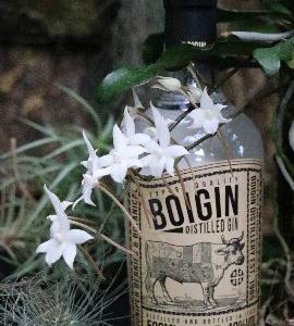 辛口シトラス 牛の 「シルヴィオカルタ ボイジン」