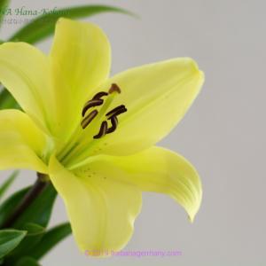 爽やかなイエロー&グリーンでまとめた生け花 Yellow and Green Ikebana