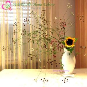 夏の代表花といえば ヒマワリ(向日葵)Helianthus annuus