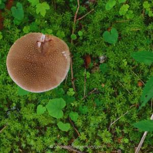 黒い森は野草の宝庫 The Black Forest is a treasure trove of wild plants